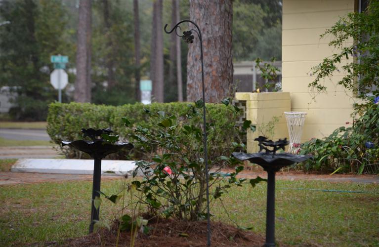 Caroline Manor garden